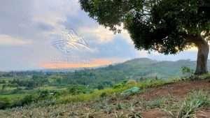 4 hectare lot in brgy bago don salvador (1)